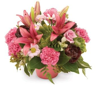 Perfect Posy for flower delivery new zealand wide