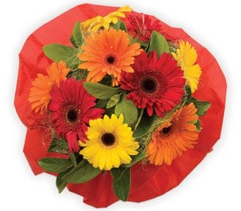 Bright Delight for flower delivery new zealand wide