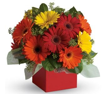 Glorious Gerberas for flower delivery united kingdom wide