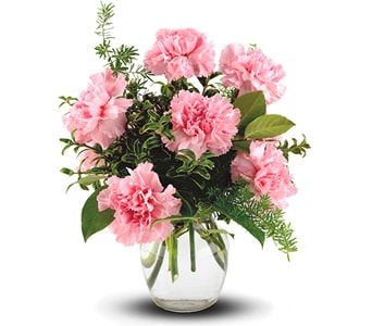 Pink Notion for flower delivery new zealand wide