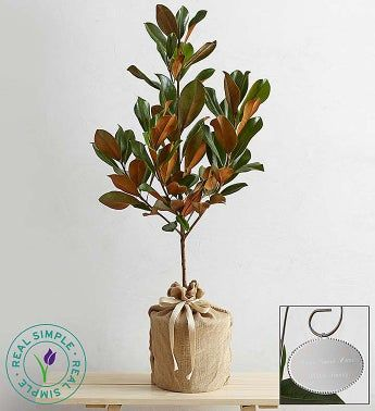 Magnolia Tree by Real Simple®