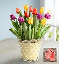 Colorful Tulips + Free Gloves