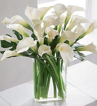 Winter White Calla Lilies