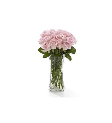 18 Baby Pink Roses
