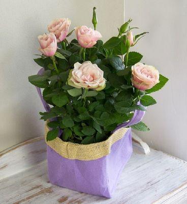 Pink Rose Gift Bag Bouquet