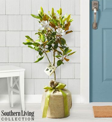 Magnolia Tree by Southern Living®