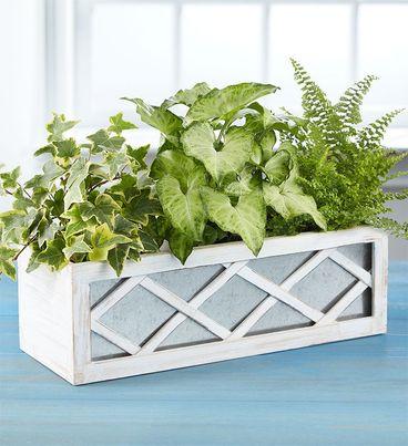 Green Plant Trio