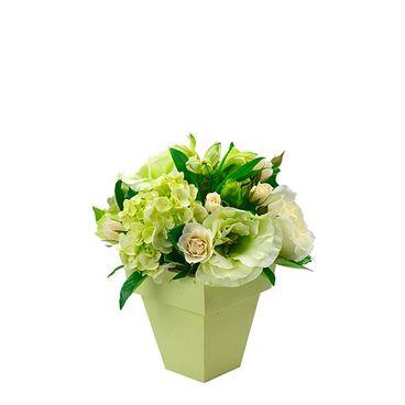 White Flower Shine